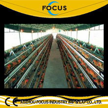 hot sale full or semi automatic A or H type cages feeding equipments system for poultry chicken