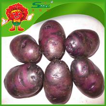 2015 fresh purple potato Chinese fresh potatoes exporter