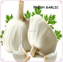natural garlic best selling white garlic
