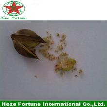 99% de supervivencia de rápido crecimiento semillas elongata paulownia de plántulas
