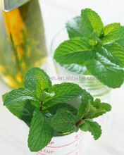 Extract Peppermint Oil 100% Natural