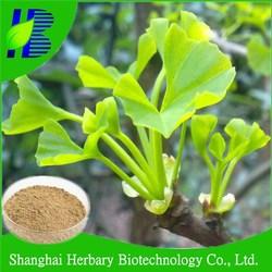 ginkgo flavone glycosides terpene lactones