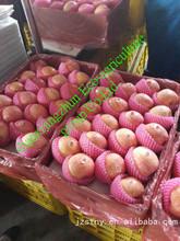 China red fuji apple fruit market price