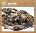 chino morchella seco para la venta