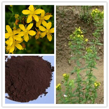 St john's wort plant extract UV 0.3% Hypericins treating easing nerve pain,anxiety or disorders