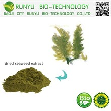 hot sale dried seaweed extract
