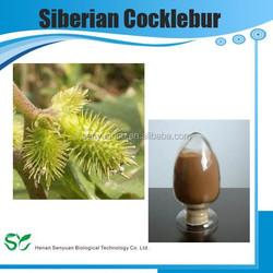 Best sale Siberian Cocklebur Fruit Extract