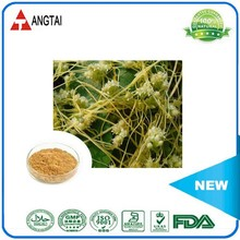 Best Quality & Best Selling herb extract Chinese Dodder Seed Extract / Semen Cuscutae extract