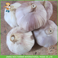 Red Garlic In Carton China Pizhou Garlic Price