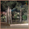 /product-gs/custom-artificial-pine-tree-for-indoor-landscaping-decoration-60237183038.html