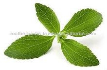 high Quality Natural Stevia