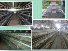 Chicken House Hot Sell High Quality
