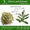 Halal&Kosher Olive Leaf Extract in Bulk,Natural Olive Leaf Powder Extract,Olive Leaf Extract Side Effects