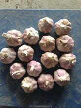 Chinese Fresh Garlic--normal white garlic pickled Garlic vegetable