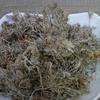 raw herb crude medicine yin chen new Herba Artemisiae