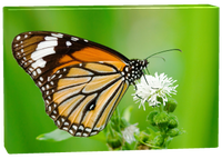 Dropshipping ready to hang butterfly canvas painting, canvas prints