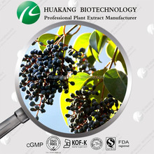 100% natural Ligustrum Extract(Ting)