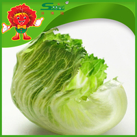 Chinese Vegetable exporter organic iceberg lettuce