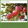 Yantai Red Wholesale Fuji Apple Price