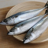 frozen pacific mackerel for philippine products
