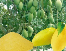 High Quality Mnago/ dried mango/Low price mango slice