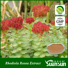 Best selling products plant extract rhodiola rosea