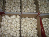 2015 fresh garlic for export Jinxiang normal white garlic