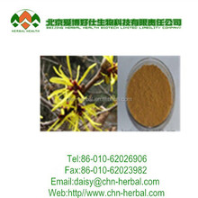 Daisy and GMP factory supply witch hazel witch hazel extract