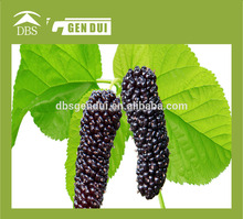 Frozen Mulberry cherry production line cherry production line