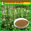 Triterpenoid Saponis 2.5%,5%,8%/Triterpenoid Saponis 10%~80% Hplc/High Quality Gotu Kola Extract