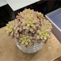 Artificial succulent Lotus Flowers Water Lily Bonsai Plants for Home & Garden Flower Pots Planters