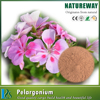 Mass supply Pelargonium Sidoides Root Extract Pelargonium hortorum