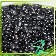 Types of black beans for sale 2014 crop black beans