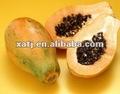 La papaína, la enzima papaína, extracto de papaya