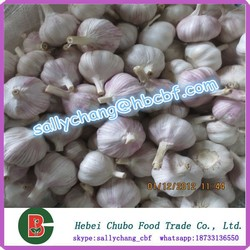 (HOT SALE) FRESH Purple Garlic/FRESH Normal Purple Garlic