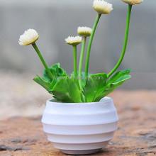 Colorized plástico de gran tamaño plástico planta de maceta de flores