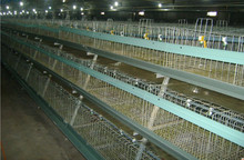 128 birds Poultry House Chicken Layer Cage For Nigerian Farm