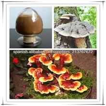 Extracto de Ganoderma polisacáridos10%, 20%, 30%