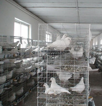 poultry battery cage for nigerian farm/Best Quality Plastic Pigeon Basket Pigoen Cage Winner Cage