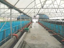 Fish farming system in closed and open water