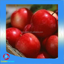Chinese pickled sour plum factory price
