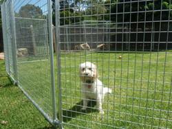 New Pet Playpen w/Door & Cover Pet Run Cage Enclosure