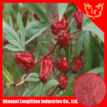 China manufacturer hibiscus flower extract polyphenol, hibiscus flower extract anthocyan 10:1
