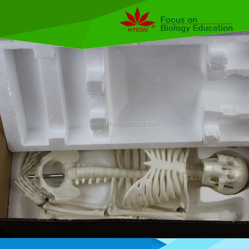 45cm human skeleton model teaching aid  mini skeleton (5)