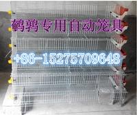 FRD-2015Popular Quality Guarantee Metal Quail Cage Design