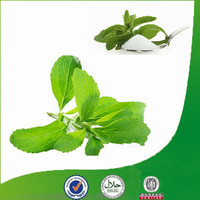 Top Selling Products Bulk Pure Stevia Extract Stevioside Wholesale Stevia Sugar