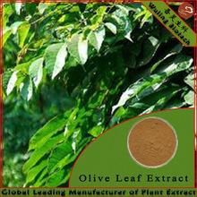 10% Oleuropein Olive Leaf Extract Powder in Bulk