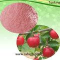 Acerola-Kirsche extrakt Vitamin C 17% 25% vc, ascorbinsäure