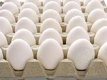 Chicken eggs,price CIF Jebel Ali