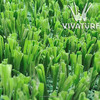 Jiangsu Fibrillated synthetic grass for football fields S50254